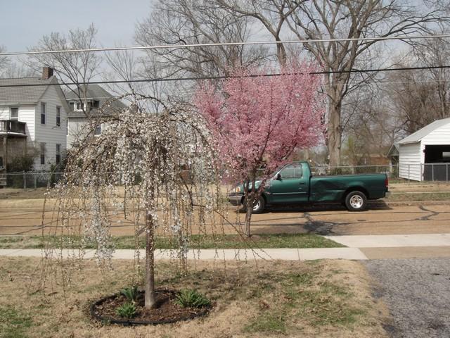 Springtime front yard